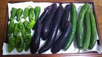 畑で収穫したお野菜沢山もらいました(^^)