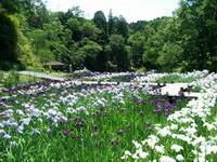 山崎菖蒲園