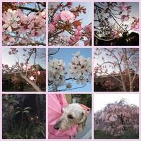 Facebook写真部☆夜桜撮影会&懇親会
