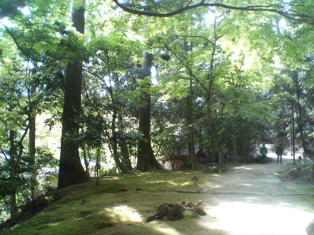 参道の木漏れ日