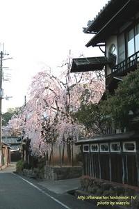 枝垂桜と料亭