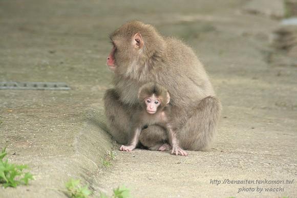 瑠璃寺(るりでら)のお猿と戯れる・・・孫悟空?