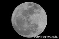 月齢14.3(大潮)-Super Moon