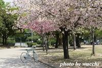 桜~シロトピア記念公園~