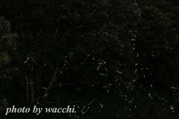 蛍 -2011年-
