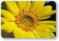 『わっち』の花図鑑