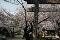 姫路神社~春爛漫~