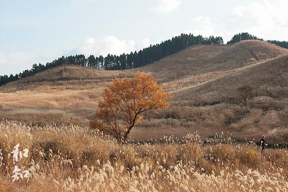 砥峰高原のススキと大自然の織り成す物語