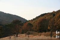 峰山高原の紅葉~鮮やかな秋の彩り~