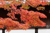 龍野公園聚遠亭~和の彩り~