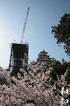 いつもと違うお花見☆眠りの準備が始まる姫路城