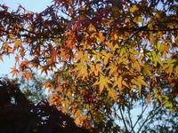 秋の『好古園』。。。後編