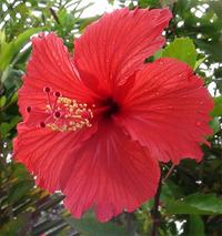 沖縄旅行へ行ったときの風景写真を一部アップ