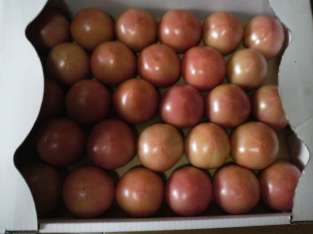 トマトを買いに遥々三田へ