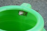 カエル君の住まい