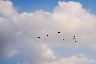 飛び鳥の行く先を想い描きながら……