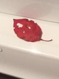 真っ赤な落ち葉の情景