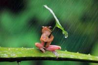 穀雨の雑感