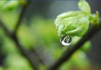 二十四節気では「雨水」です。