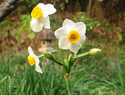 金の盃を持つ花