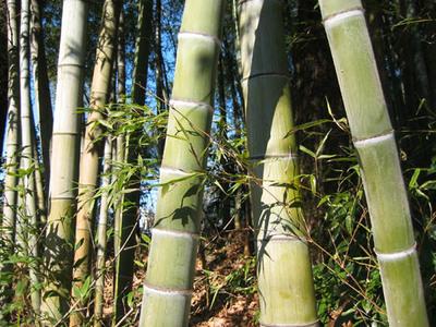 竹に上下の節在り