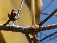 カマキリのゆり籠