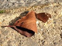 蝶のように、蛾のように