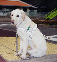 盲導犬が足りません。