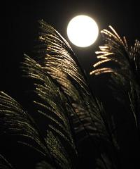 十五夜のお月見泥棒多発地区