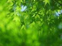 緑はgoo....