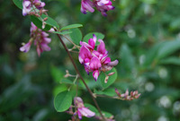 萩の花にまつわる俳句を調べてみると......