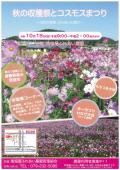 姫路市内にコスモス畑が増殖中