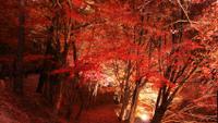 日本紅葉の名所100選。最上山公園