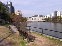京橋川岸のお花の話