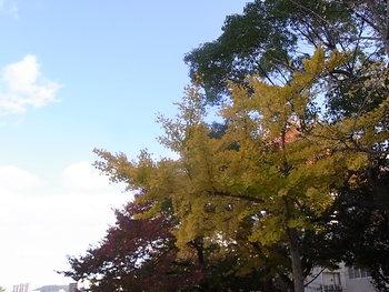 京橋川沿いの秋と期待のお蕎麦屋さん