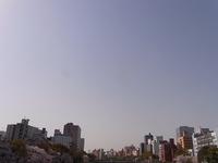 今年の桜 2018/03/31 15:47:45