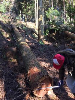 地産地消の「野谷の家」、伐採から製材まで
