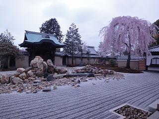 「桜」特集 京都高台寺