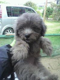 7月1日生まれのミックス犬