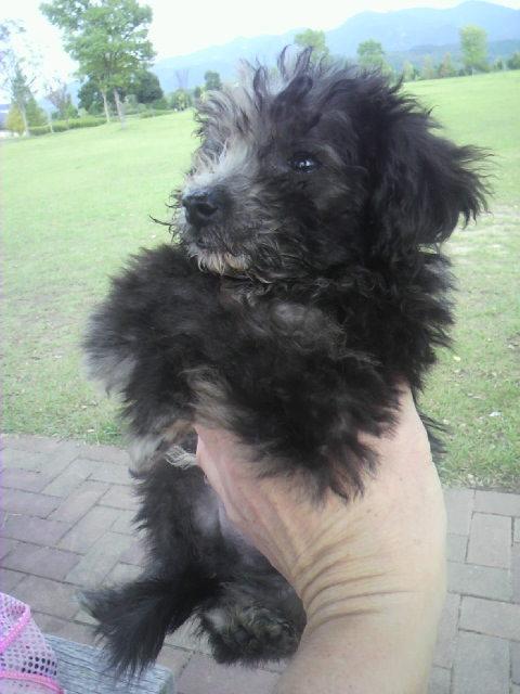 ミックス犬(7月17日生まれ)