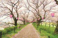 お花畑   (^_^)