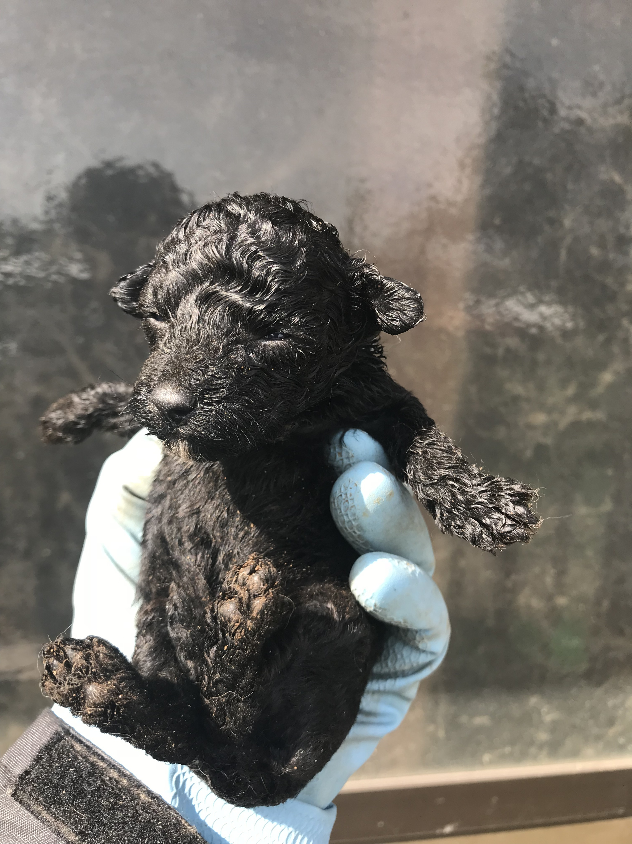 2017/9/28生まれ ミックス犬