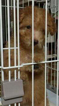 ミックス犬(チワプー クォーター)のメール