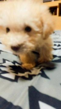 ミックス犬のメール