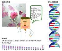 縄文系の遺伝子