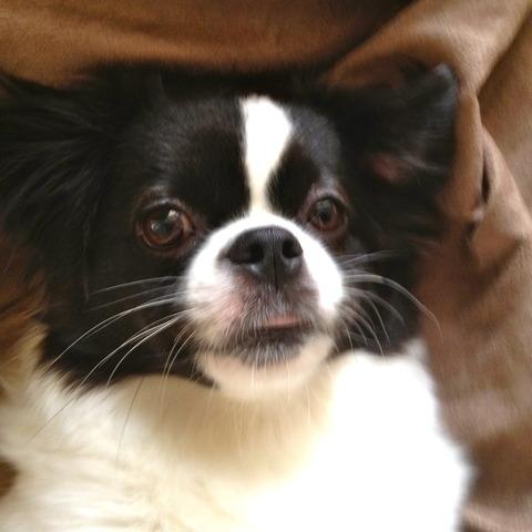 愛犬バニラ