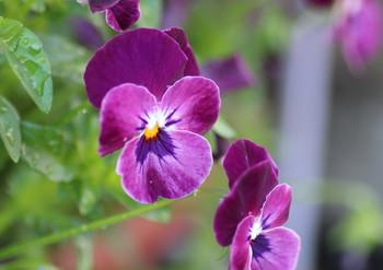 花が綺麗な季節です