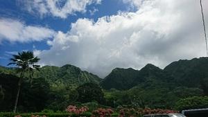 ハワイの植物に触れる旅 ④オアフ島「ハワイ大学ライアン演習林」