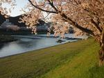 桜散って、新緑の季節が待ち遠しい