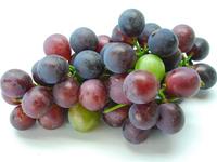 「葡萄は世界最古の果物。」